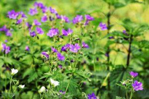 naturalne zioła z gorzknika