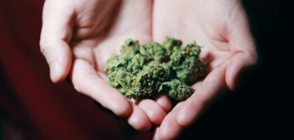 nasiona marihuany sklep